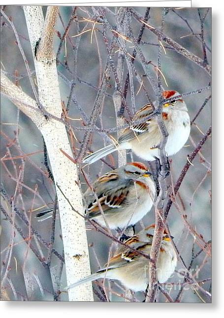 Wintry Greeting Cards - Three of a kind Greeting Card by Karen Cook