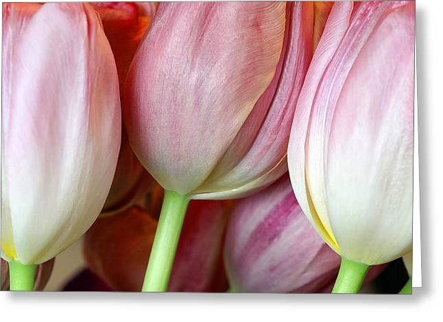 Floral Glass Greeting Cards - Three of the Bunch Greeting Card by Bill Morgenstern