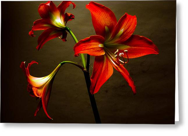 Organe Greeting Cards - Three Orange Lilies Greeting Card by Richard Singleton