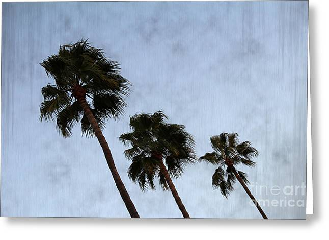Nina Prommer Greeting Cards - Three Palm Trees Greeting Card by Nina Prommer