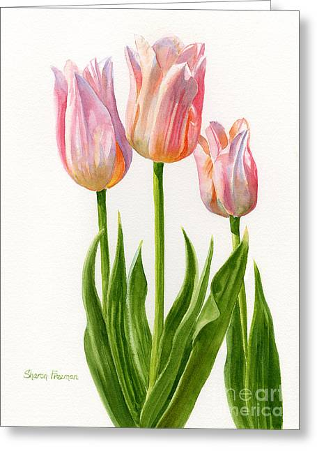 Pink Blossoms Greeting Cards - Three Peach Colored Tulips Greeting Card by Sharon Freeman