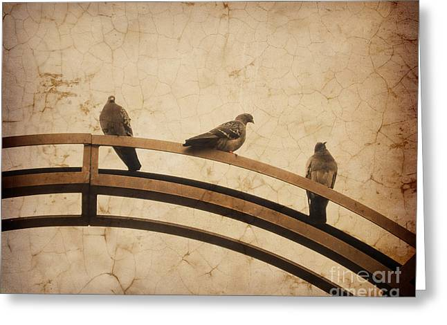 On Top Greeting Cards - Three pigeons perched on a metallic arch. Greeting Card by Bernard Jaubert