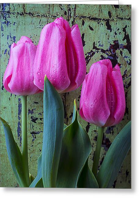 Rain Drop Greeting Cards - Three Pink Tulips Greeting Card by Garry Gay