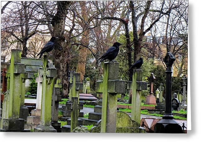 Gia Marie Houck Greeting Cards - Three Ravens Greeting Card by Gia Marie Houck