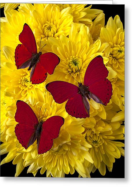 Antenna Greeting Cards - Three Red Butterflys Greeting Card by Garry Gay