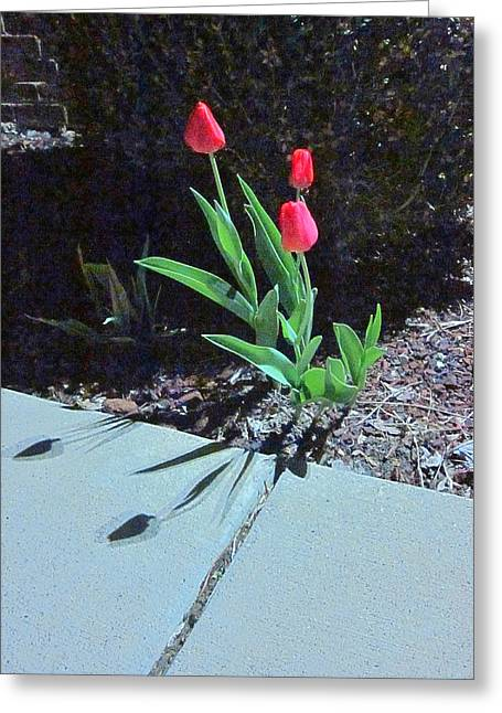 Guy Ricketts Photography And Art Greeting Cards - Three Red Tulips Greeting Card by Guy Ricketts