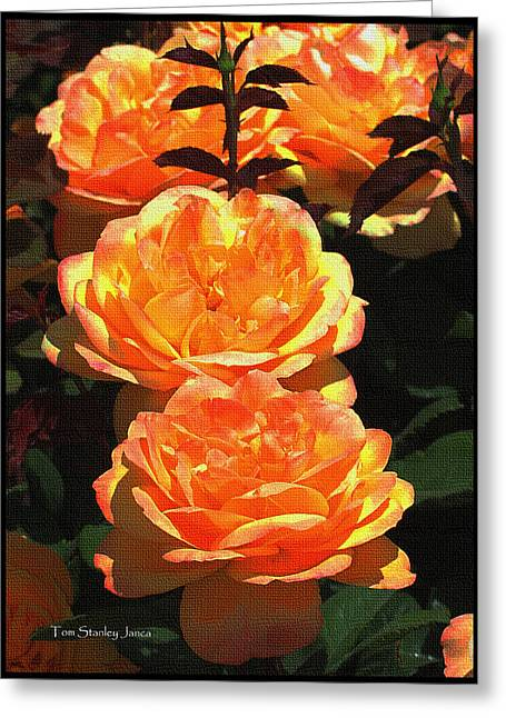 Mcc Greeting Cards - Four Rose At MCC Greeting Card by Tom Janca