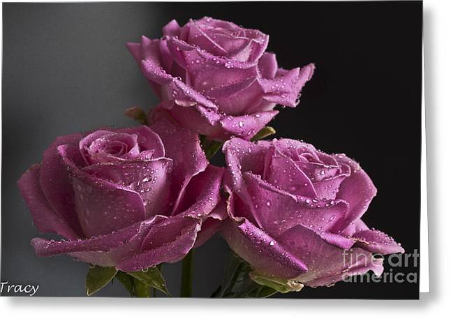 Three Roses Greeting Card by Tracy  Hall