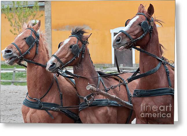 Blinders Greeting Cards - Three running horses Greeting Card by Beth Wolff