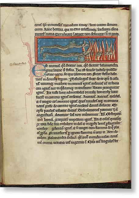 Three Salamanders Greeting Card by British Library