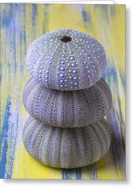 Three-colored Greeting Cards - Three Sea Urchins Greeting Card by Garry Gay