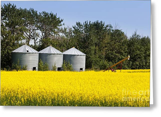 Agronomy Greeting Cards - Three silos canola rapeseed agriculture field Greeting Card by Stephan Pietzko