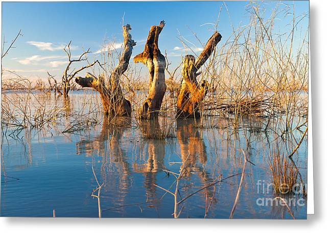 Submerged Greeting Cards - Three Sisters Greeting Card by Bill  Robinson