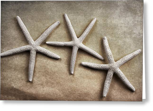 Three Starfish Greeting Card by Carol Leigh