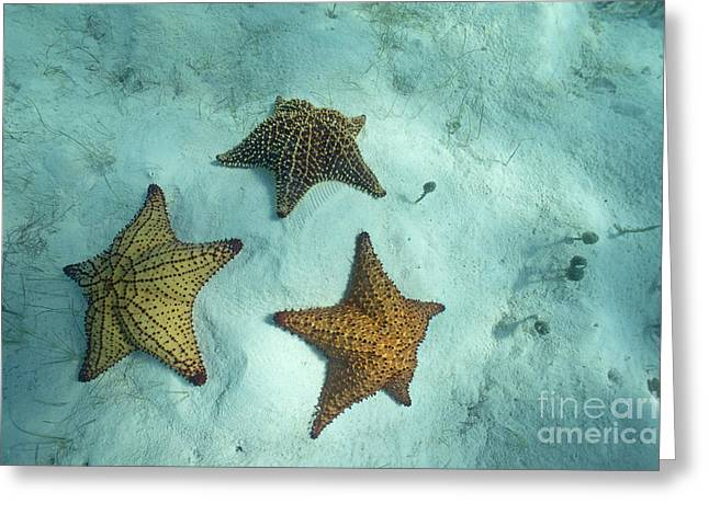 Three starfishes on sandy seabed Greeting Card by Sami Sarkis