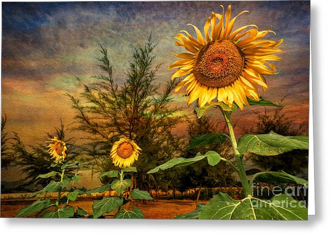 Stigma Greeting Cards - Three Sunflowers Greeting Card by Adrian Evans