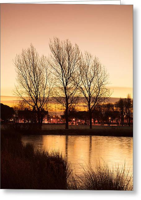 Winter Digital Photo Scene Greeting Cards - Three Trees Greeting Card by Christine Smart