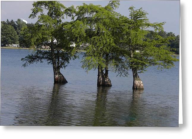 Cim Paddock Greeting Cards - Three Trees Greeting Card by Cim Paddock