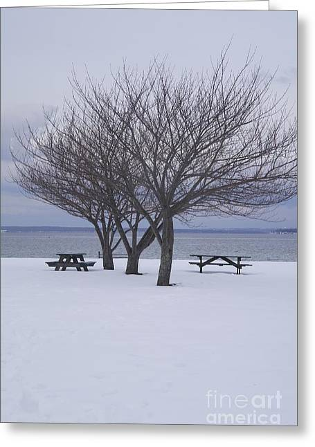 Winter Promise Greeting Cards - Three Trees. Greeting Card by Earth