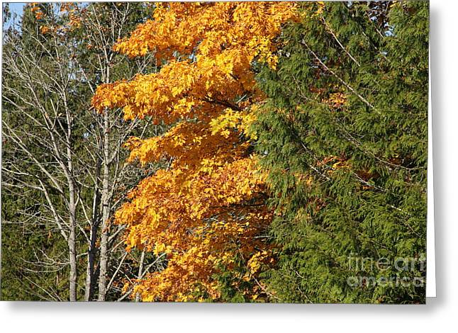 British Columbia Greeting Cards - Three Trees Greeting Card by Graham Foulkes