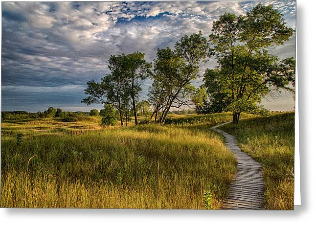 Kohler Greeting Cards - Three Trees In The Dunes Greeting Card by Jeffrey Ewig