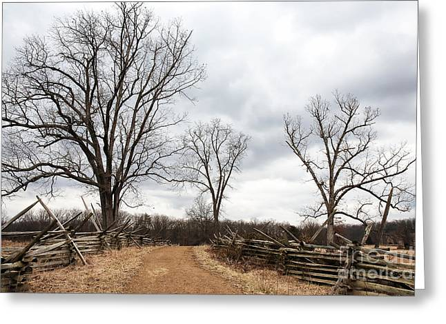 Gallery Three Greeting Cards - Three Trees Greeting Card by John Rizzuto
