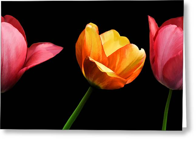 Petal Mixed Media Greeting Cards - Spring Tulips Greeting Card by Steven  Michael