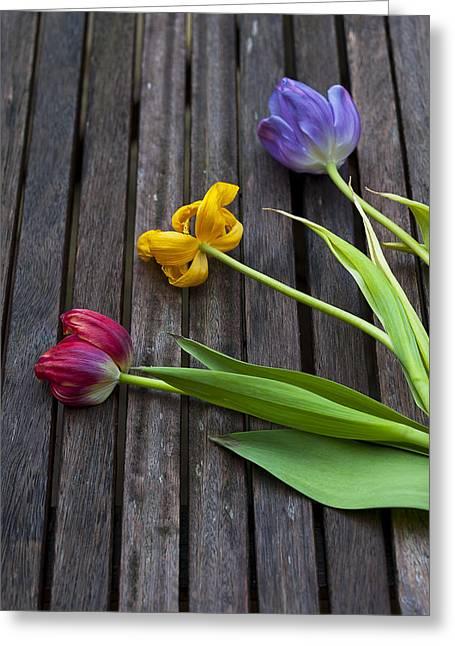 Dusky Pink Greeting Cards - Three Tulips Greeting Card by Svetlana Sewell