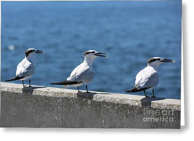 Three Turning Terns Greeting Card by Carol Groenen