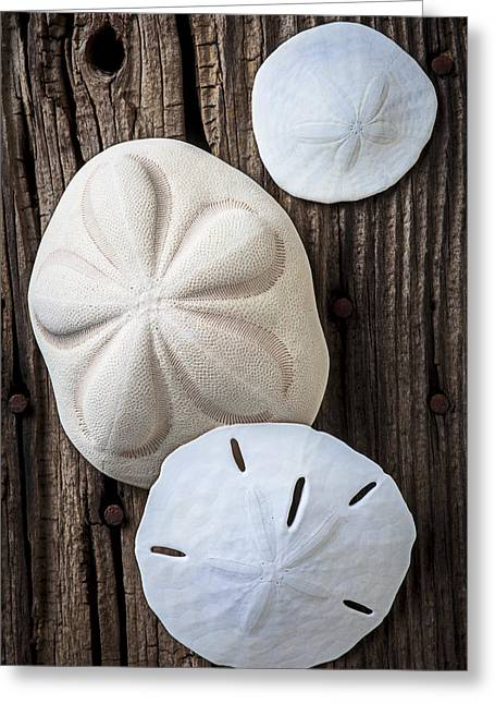 Old Objects Greeting Cards - Three types of sand dollars Greeting Card by Garry Gay