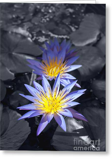 Water Lilly Mixed Media Greeting Cards - Three Water Lilies Greeting Card by Design Windmill