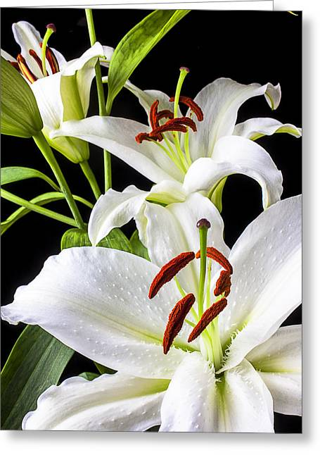 Stamen Greeting Cards - Three white lilies Greeting Card by Garry Gay