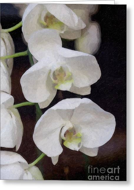 Linda Matlow Greeting Cards - Three  White Orchids Greeting Card by Linda Matlow