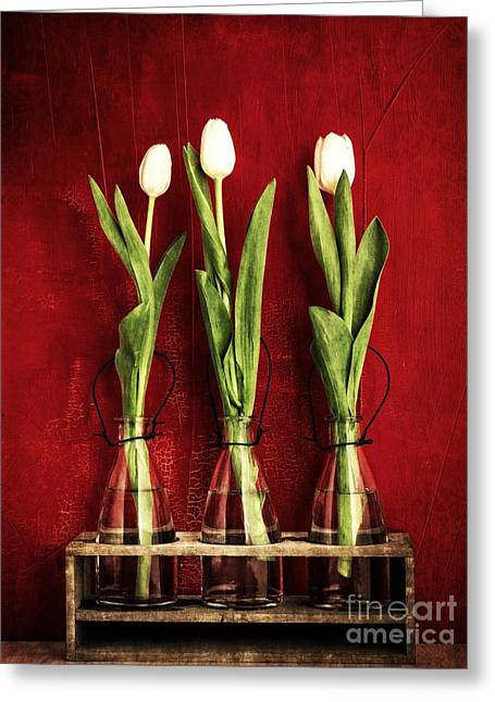 Texture Flower Greeting Cards - Three White Tulips Floral Greeting Card by Edward Fielding