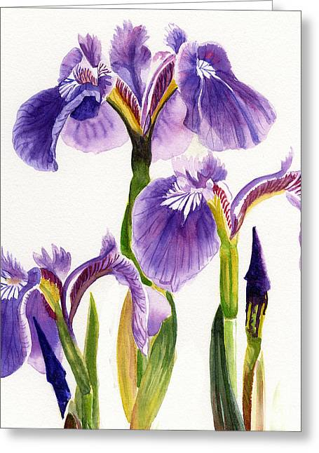Background Paintings Greeting Cards - Three Wild Irises Square Design Greeting Card by Sharon Freeman