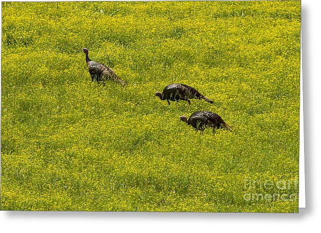 Meleagris Gallopavo Greeting Cards - Three Wild Turkeys in Wild Flowers-Signed-#3469 Greeting Card by J L Woody Wooden