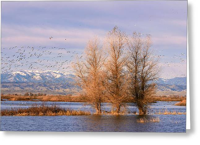 Willow Lake Greeting Cards - Three Willow Trees Greeting Card by Kathleen Bishop