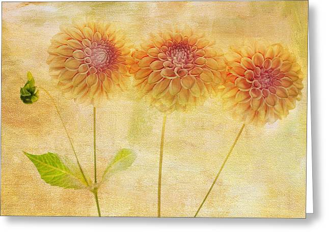 Dahlia Greeting Cards - Three Yellow Dahlias Greeting Card by Rebecca Cozart
