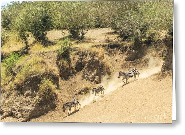 East Africa Greeting Cards - Three Zebras going down a riverbank Greeting Card by Liz Leyden