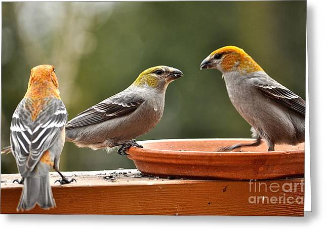 Feeder Framed Prints Greeting Cards - Threes a Crowd Greeting Card by Susan Chesnut