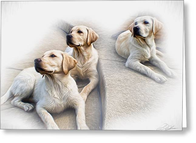Puppies Digital Art Greeting Cards - Threes Company Greeting Card by Peter Chilelli