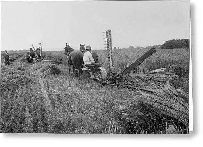 Haying Greeting Cards - Threshing Hay - 1893 Greeting Card by Daniel Hagerman