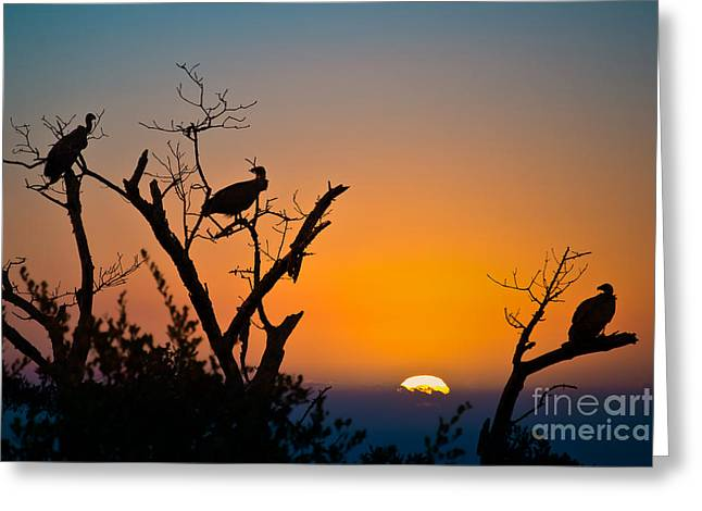 Vulture Silhouettes Greeting Cards - Three vultures waiting Greeting Card by Delphimages Photo Creations