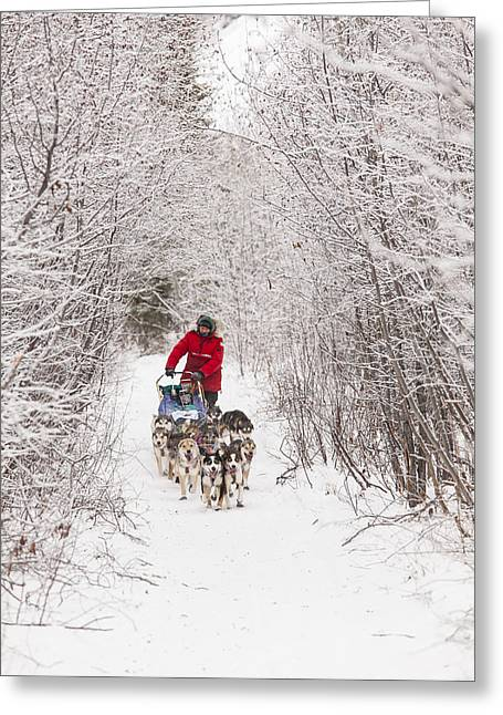 Sled Dogs Greeting Cards - Through a Tunnel of Snowy Trees Greeting Card by Tim Grams