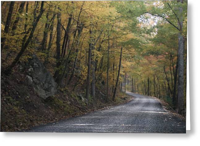 Mountain Road Greeting Cards - Forest Road Color Version Greeting Card by Parker Cunningham