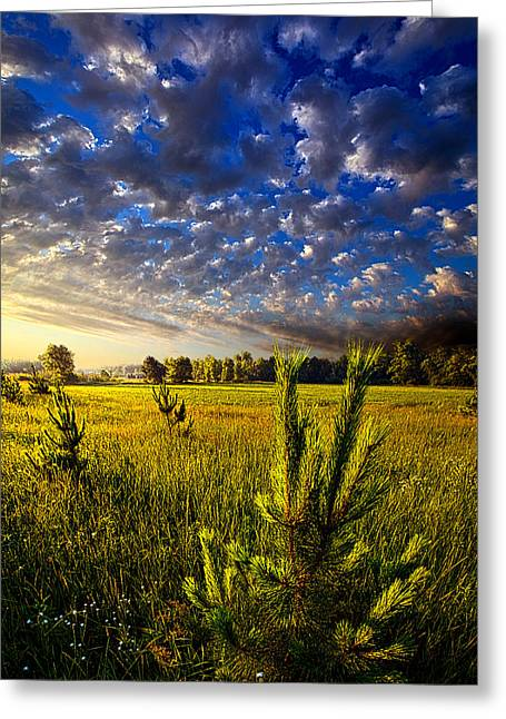 Pines Greeting Cards - Through Fields of Dreams Greeting Card by Phil Koch