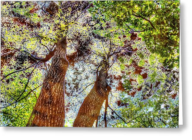 U.s.s. Pyrography Greeting Cards - Through the branches into the sky Greeting Card by Yury Bashkin
