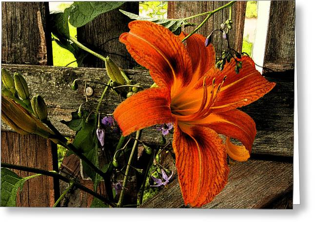 Diane Reed Greeting Cards - Through the Fence Greeting Card by Diane Reed