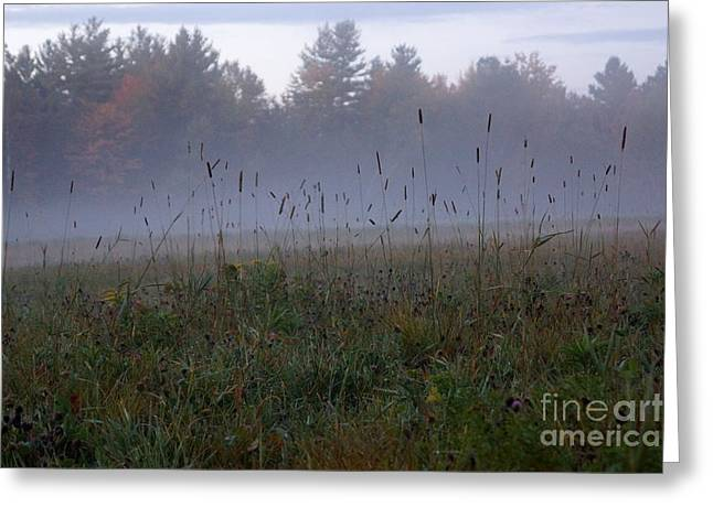 Newengland Greeting Cards - Through the Field Grass Greeting Card by Kerri Mortenson