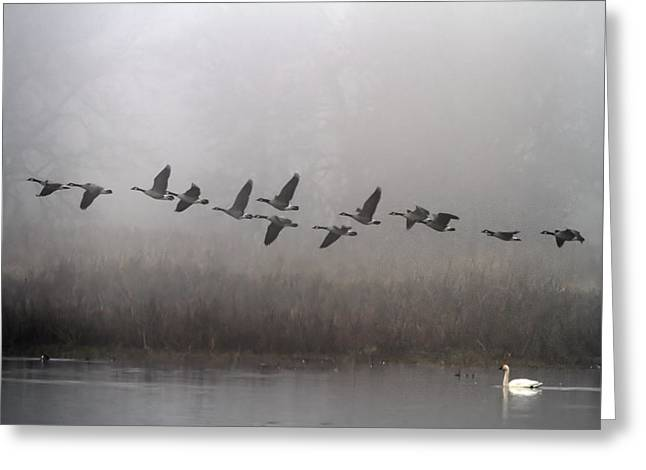 Through The Fog Greeting Card by Angie Vogel